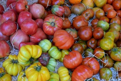 Multicolour tomatoes